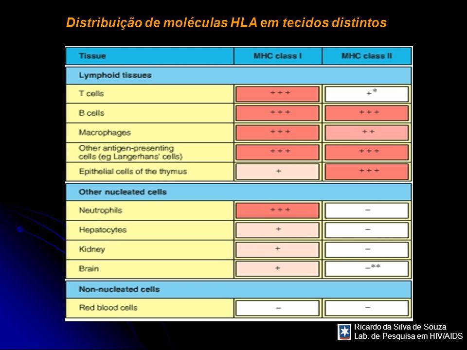 Ricardo da Silva de Souza Lab. de Pesquisa em HIV/AIDS Distribuição de moléculas HLA em tecidos distintos