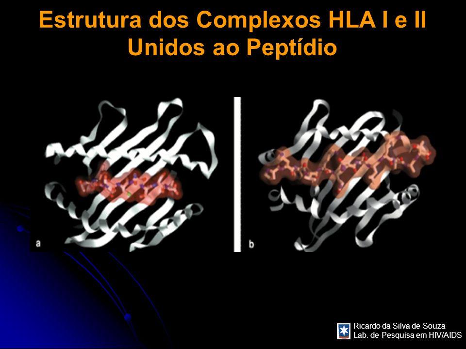Ricardo da Silva de Souza Lab. de Pesquisa em HIV/AIDS Estrutura dos Complexos HLA I e II Unidos ao Peptídio