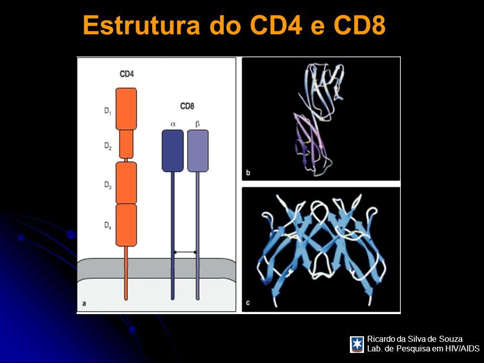 Ricardo da Silva de Souza Lab. de Pesquisa em HIV/AIDS Estrutura do CD4 e CD8