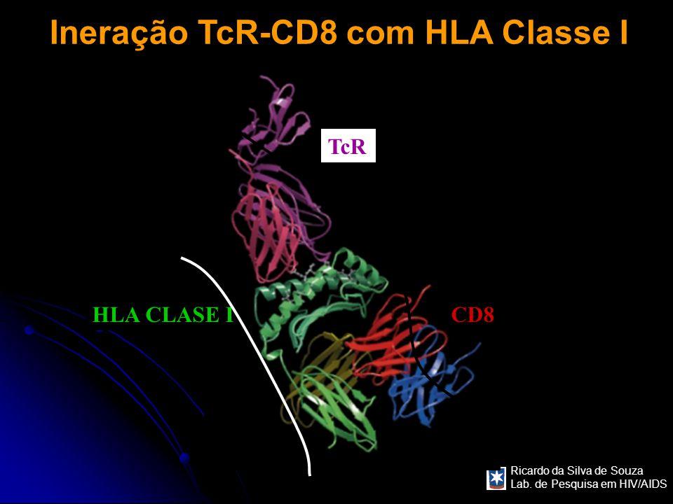 Ricardo da Silva de Souza Lab. de Pesquisa em HIV/AIDS Ineração TcR-CD8 com HLA Classe I HLA CLASE I TcR CD8