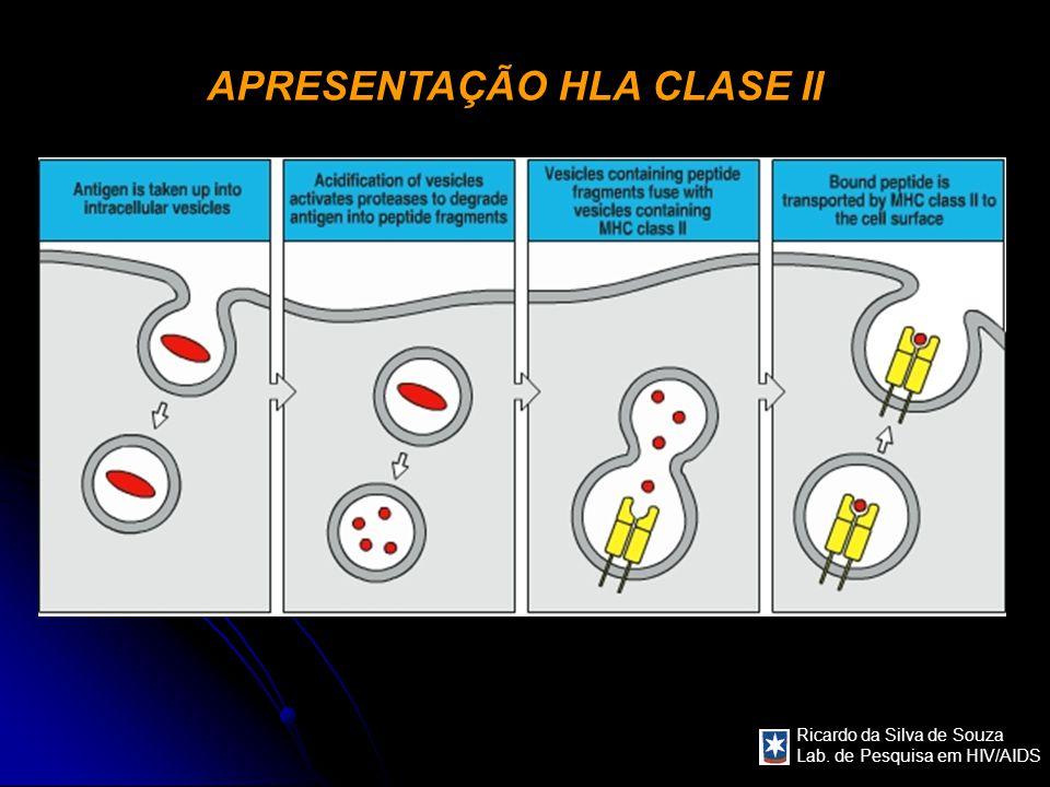 Ricardo da Silva de Souza Lab. de Pesquisa em HIV/AIDS APRESENTAÇÃO HLA CLASE II