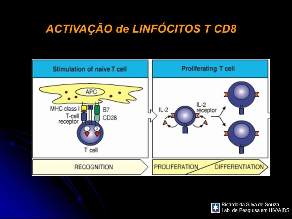 Ricardo da Silva de Souza Lab. de Pesquisa em HIV/AIDS ACTIVAÇÃO de LINFÓCITOS T CD8
