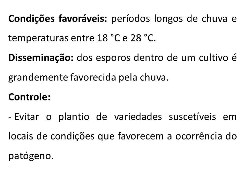 Condições favoráveis: períodos longos de chuva e temperaturas entre 18 °C e 28 °C. Disseminação: dos esporos dentro de um cultivo é grandemente favore