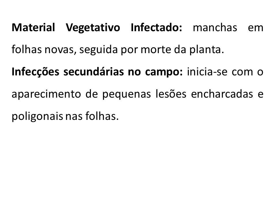 Material Vegetativo Infectado: manchas em folhas novas, seguida por morte da planta. Infecções secundárias no campo: inicia-se com o aparecimento de p