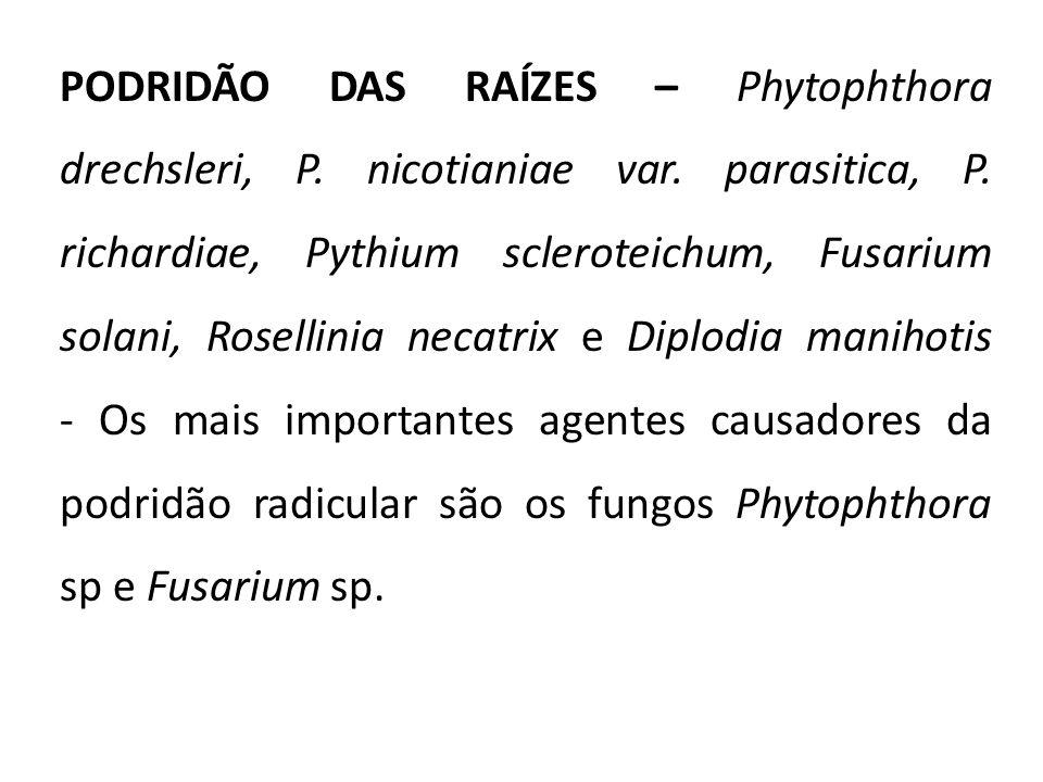 PODRIDÃO DAS RAÍZES – Phytophthora drechsleri, P. nicotianiae var. parasitica, P. richardiae, Pythium scleroteichum, Fusarium solani, Rosellinia necat