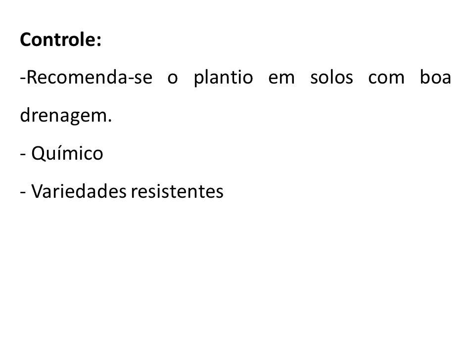 Controle: -Recomenda-se o plantio em solos com boa drenagem. - Químico - Variedades resistentes