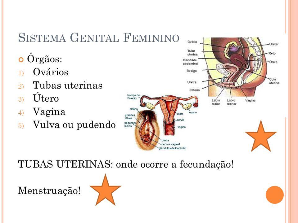 S ISTEMA G ENITAL F EMININO Órgãos: 1) Ovários 2) Tubas uterinas 3) Útero 4) Vagina 5) Vulva ou pudendo TUBAS UTERINAS: onde ocorre a fecundação! Mens