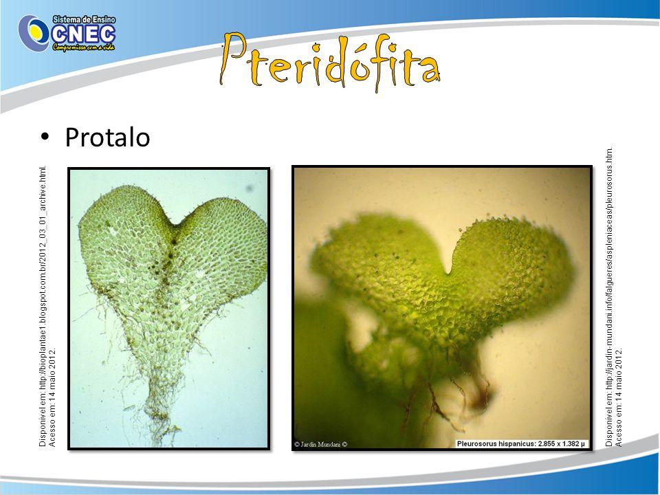 Protalo Disponível em: http://bioplantae1.blogspot.com.br/2012_03_01_archive.html. Acesso em: 14 maio 2012. Disponível em: http://jardin-mundani.info/