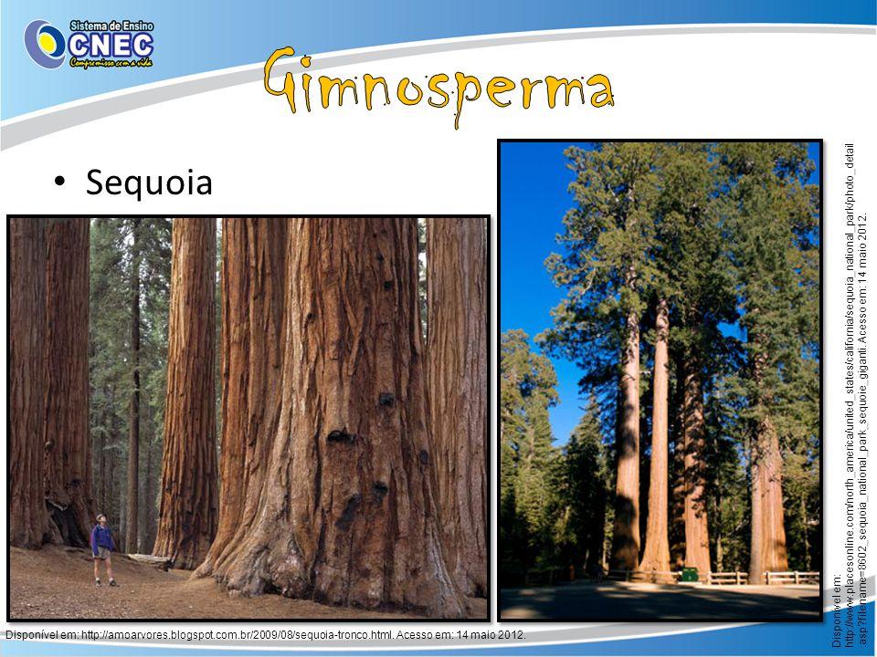 Sequoia Disponível em: http://amoarvores.blogspot.com.br/2009/08/sequoia-tronco.html. Acesso em: 14 maio 2012. Disponível em: http://www.placesonline.