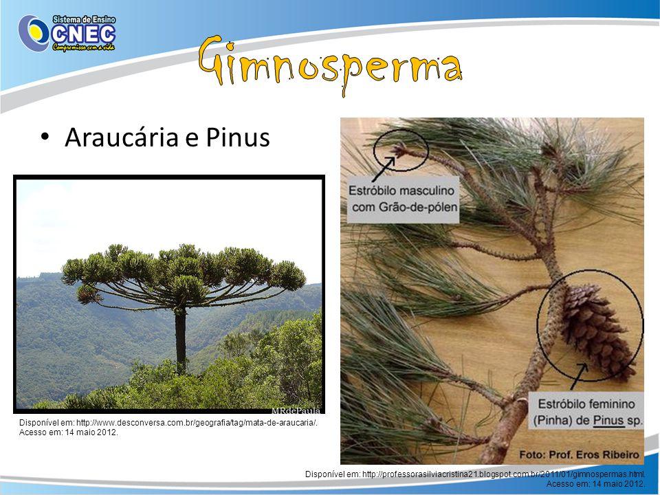 Araucária e Pinus Disponível em: http://www.desconversa.com.br/geografia/tag/mata-de-araucaria/. Acesso em: 14 maio 2012. Disponível em: http://profes