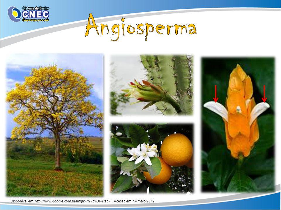 Disponível em: http://www.google.com.br/imghp?hl=pt-BR&tab=ii. Acesso em: 14 maio 2012.