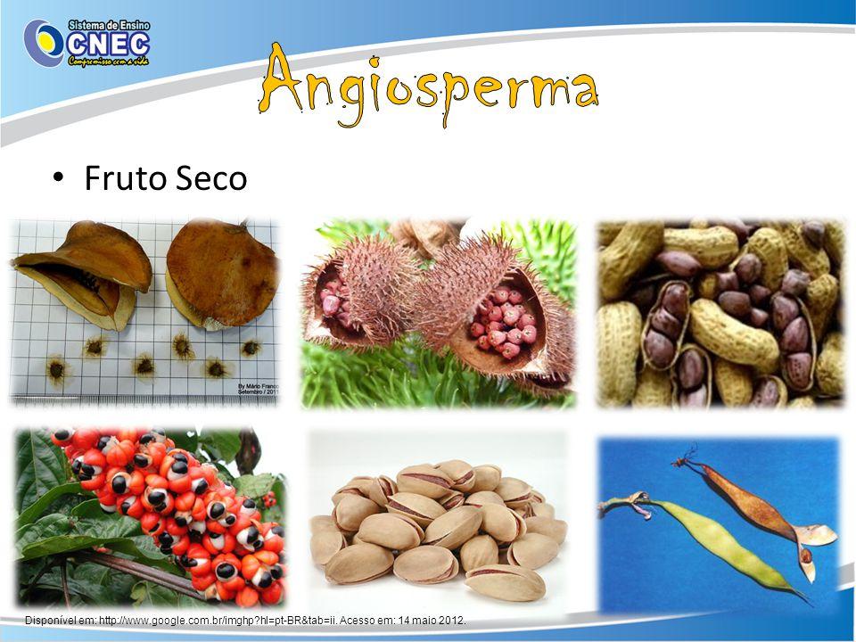 Fruto Seco Disponível em: http://www.google.com.br/imghp?hl=pt-BR&tab=ii. Acesso em: 14 maio 2012.