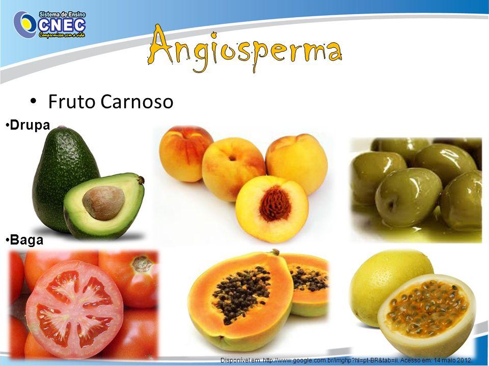 Fruto Carnoso Disponível em: http://www.google.com.br/imghp?hl=pt-BR&tab=ii. Acesso em: 14 maio 2012. Drupa Baga