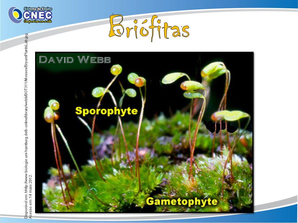 Disponível em: hhttp://www.biologie.uni-hamburg.de/b-online/library/webb/BOT311/Mosses/BryumPlantsLab.jpg. Acesso em: 14 maio 2012.