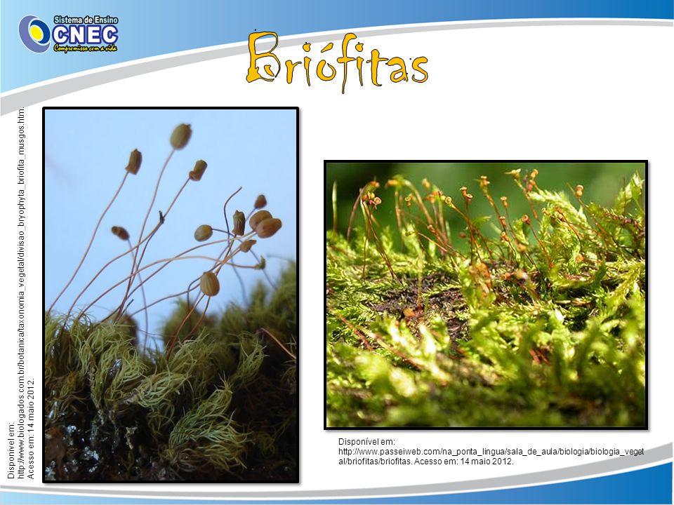 Disponível em: http://www.passeiweb.com/na_ponta_lingua/sala_de_aula/biologia/biologia_veget al/briofitas/briofitas. Acesso em: 14 maio 2012. Disponív
