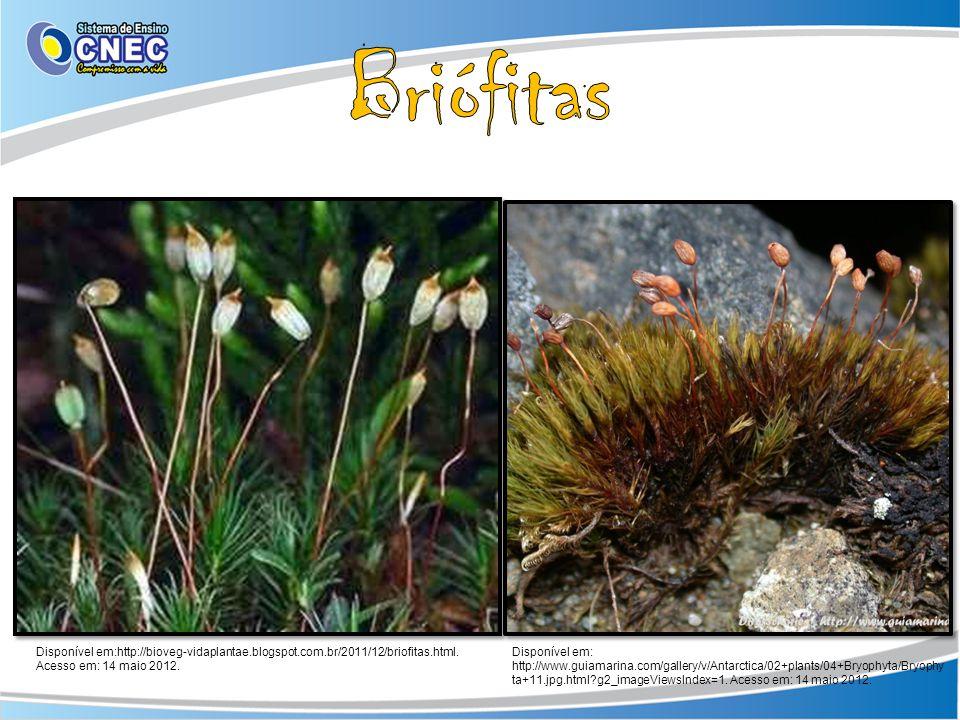 Disponível em:http://bioveg-vidaplantae.blogspot.com.br/2011/12/briofitas.html. Acesso em: 14 maio 2012. Disponível em: http://www.guiamarina.com/gall