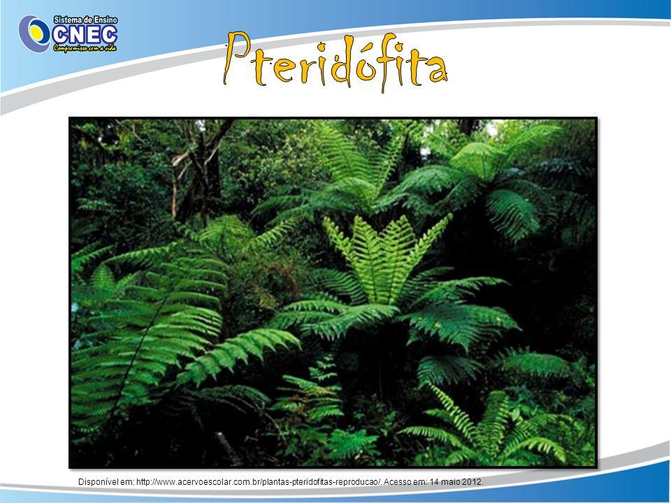 Disponível em: http://www.acervoescolar.com.br/plantas-pteridofitas-reproducao/. Acesso em: 14 maio 2012.