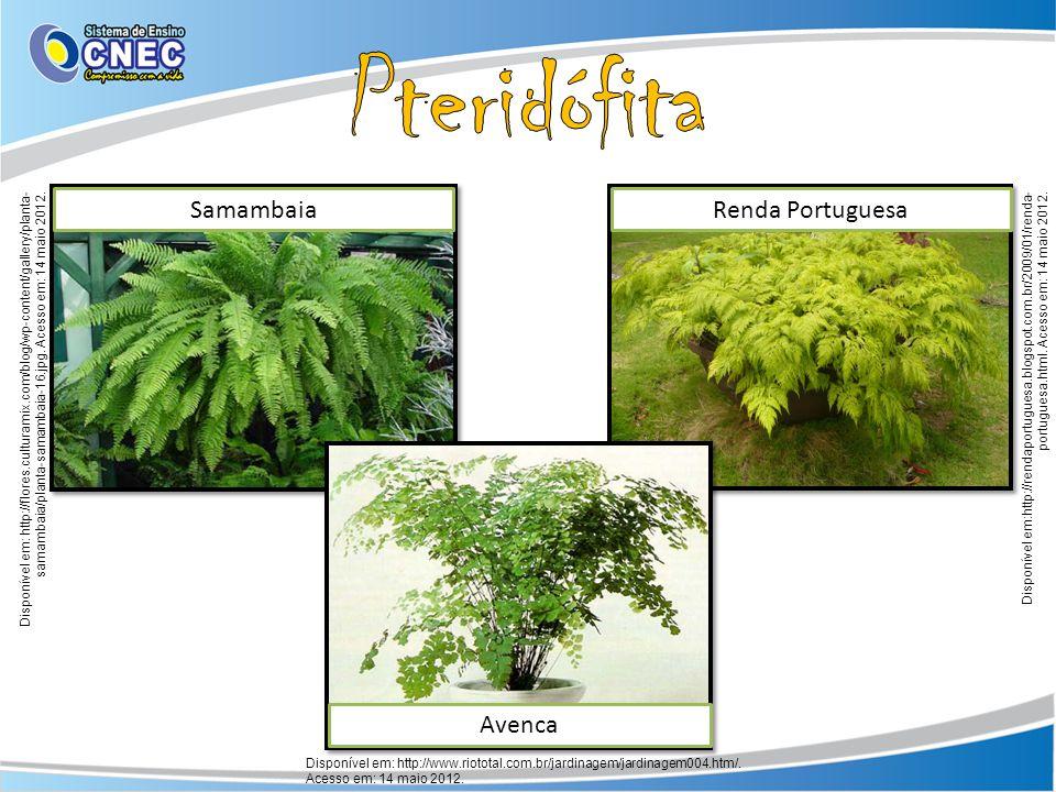 SamambaiaRenda Portuguesa Avenca Disponível em: http://www.riototal.com.br/jardinagem/jardinagem004.htm/. Acesso em: 14 maio 2012. Disponível em: http