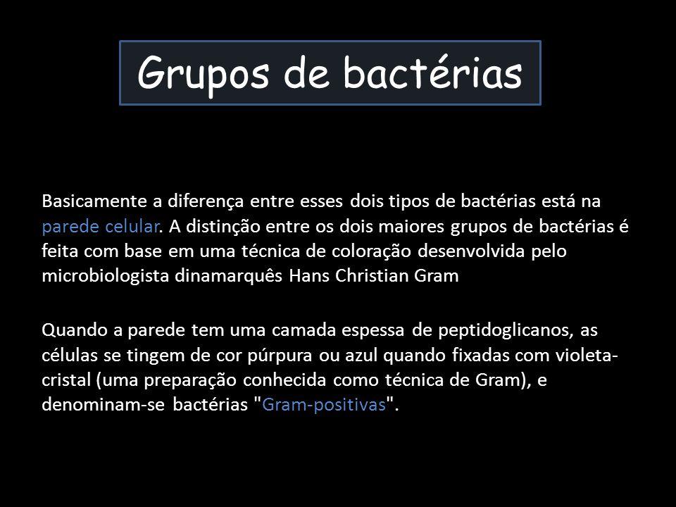 Basicamente a diferença entre esses dois tipos de bactérias está na parede celular. A distinção entre os dois maiores grupos de bactérias é feita com