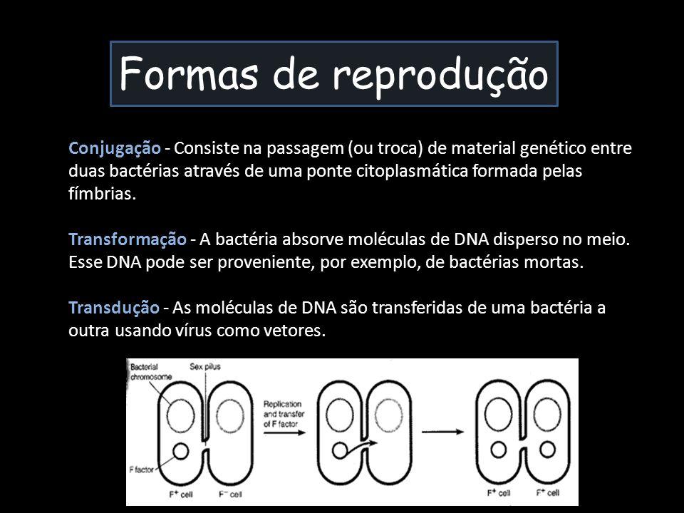 Formas de reprodução Conjugação - Consiste na passagem (ou troca) de material genético entre duas bactérias através de uma ponte citoplasmática formad