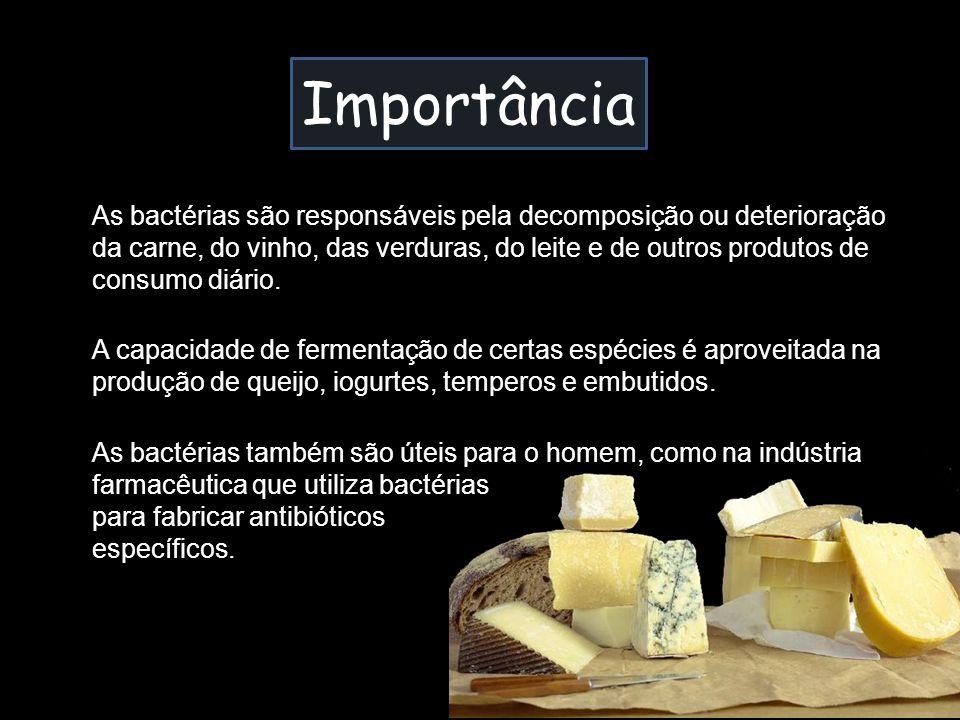 Importância As bactérias são responsáveis pela decomposição ou deterioração da carne, do vinho, das verduras, do leite e de outros produtos de consumo