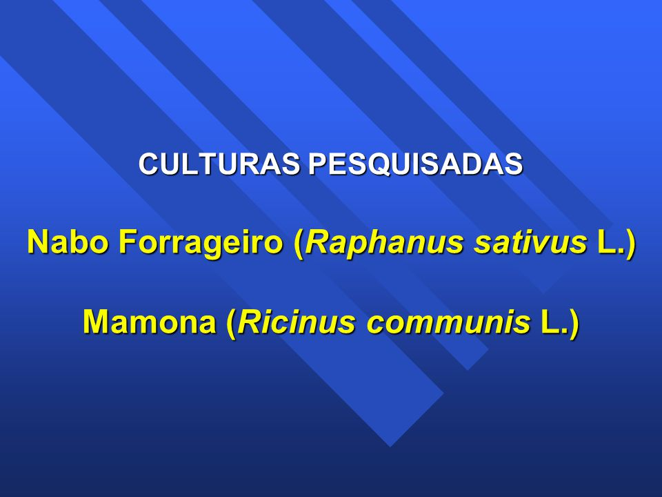 CULTURAS PESQUISADAS Nabo Forrageiro (Raphanus sativus L.) Mamona (Ricinus communis L.)
