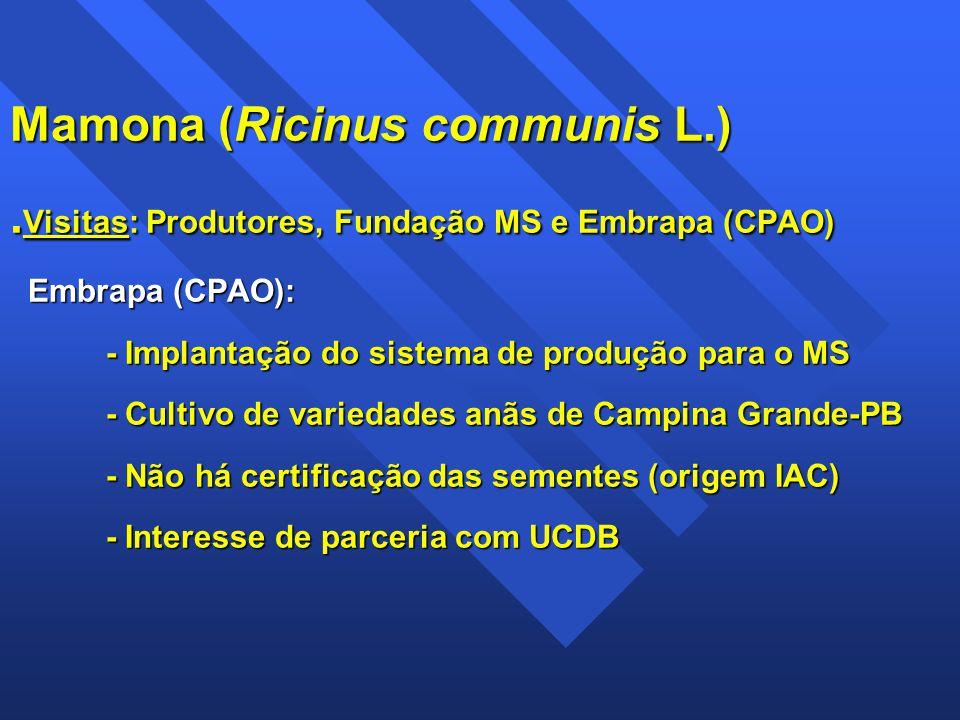 Mamona (Ricinus communis L.). Visitas: Produtores, Fundação MS e Embrapa (CPAO) Embrapa (CPAO): - Implantação do sistema de produção para o MS - Culti