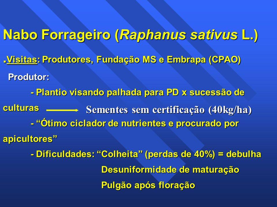 Nabo Forrageiro (Raphanus sativus L.). Visitas: Produtores, Fundação MS e Embrapa (CPAO) Produtor: - Plantio visando palhada para PD x sucessão de cul