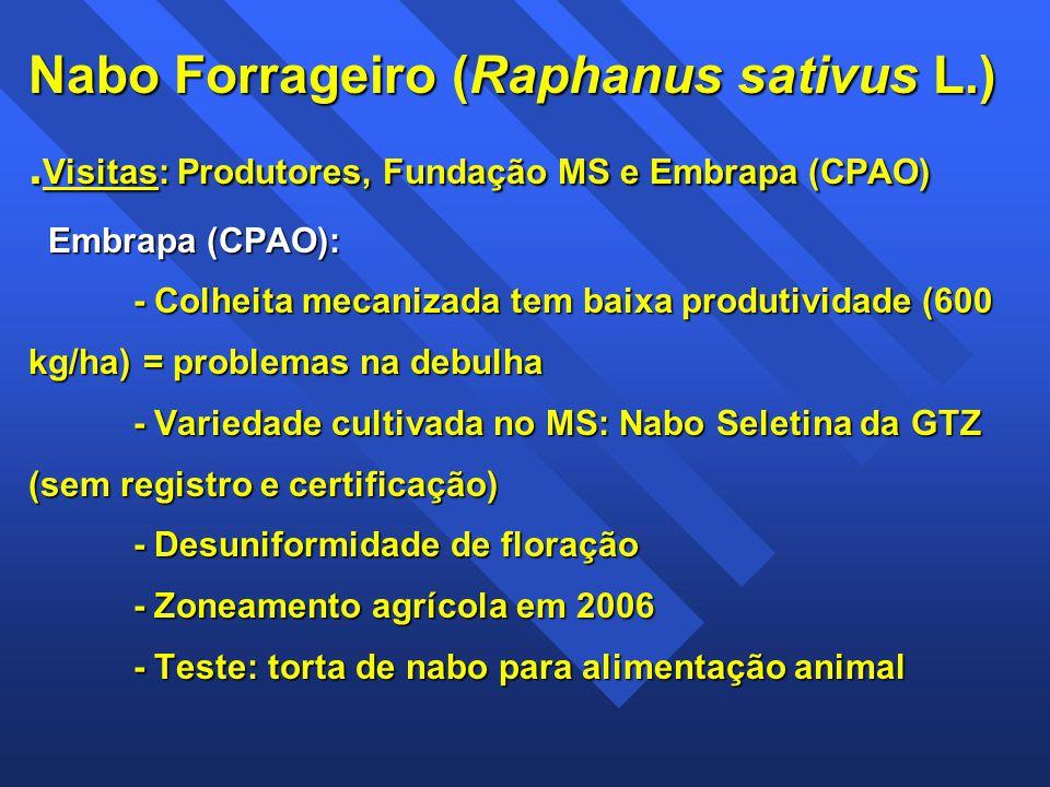 Nabo Forrageiro (Raphanus sativus L.). Visitas: Produtores, Fundação MS e Embrapa (CPAO) Embrapa (CPAO): - Colheita mecanizada tem baixa produtividade