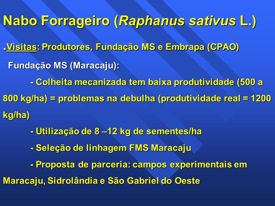 Nabo Forrageiro (Raphanus sativus L.). Visitas: Produtores, Fundação MS e Embrapa (CPAO) Fundação MS (Maracaju): - Colheita mecanizada tem baixa produ