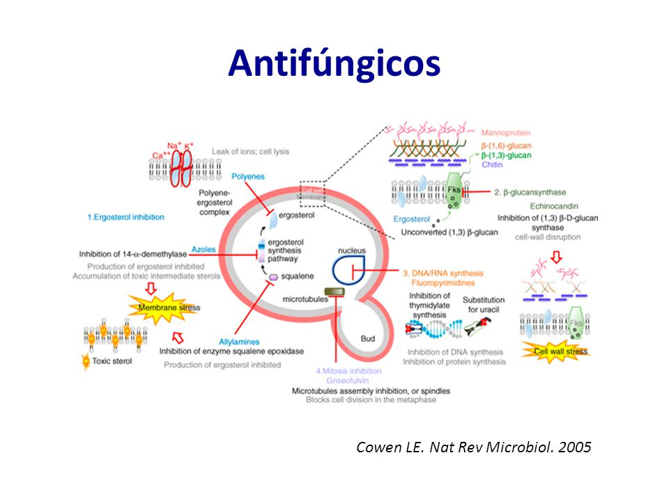 Antifúngicos Cowen LE. Nat Rev Microbiol. 2005