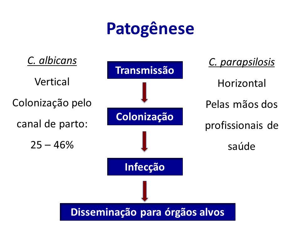 Patogênese Transmissão Colonização Infecção C. albicans Vertical Colonização pelo canal de parto: 25 – 46% C. parapsilosis Horizontal Pelas mãos dos p