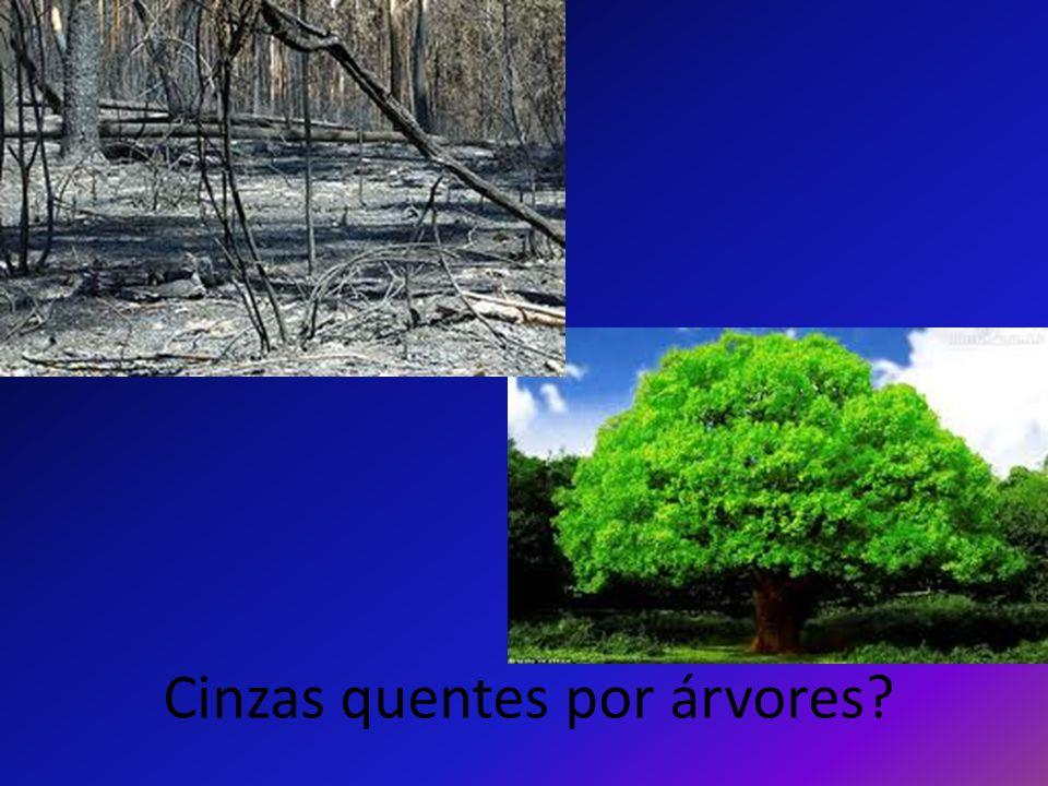 Cinzas quentes por árvores