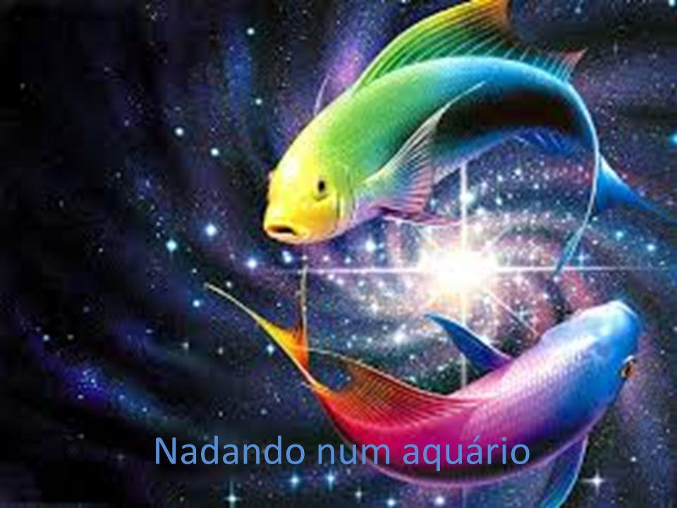 Nadando num aquário