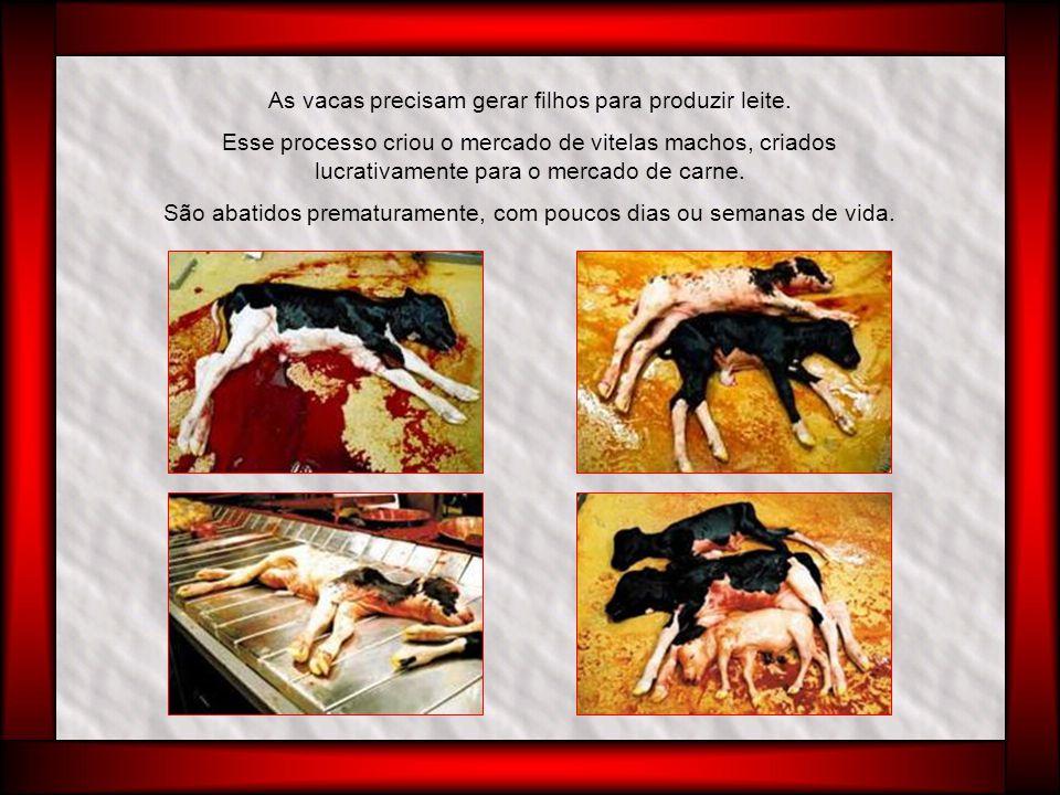 Um dos fatores que tomam essa carne apreciada é sua maciez e, de acordo com a especificação dos compradores, sua aparência branca e praticamente sem sangue.
