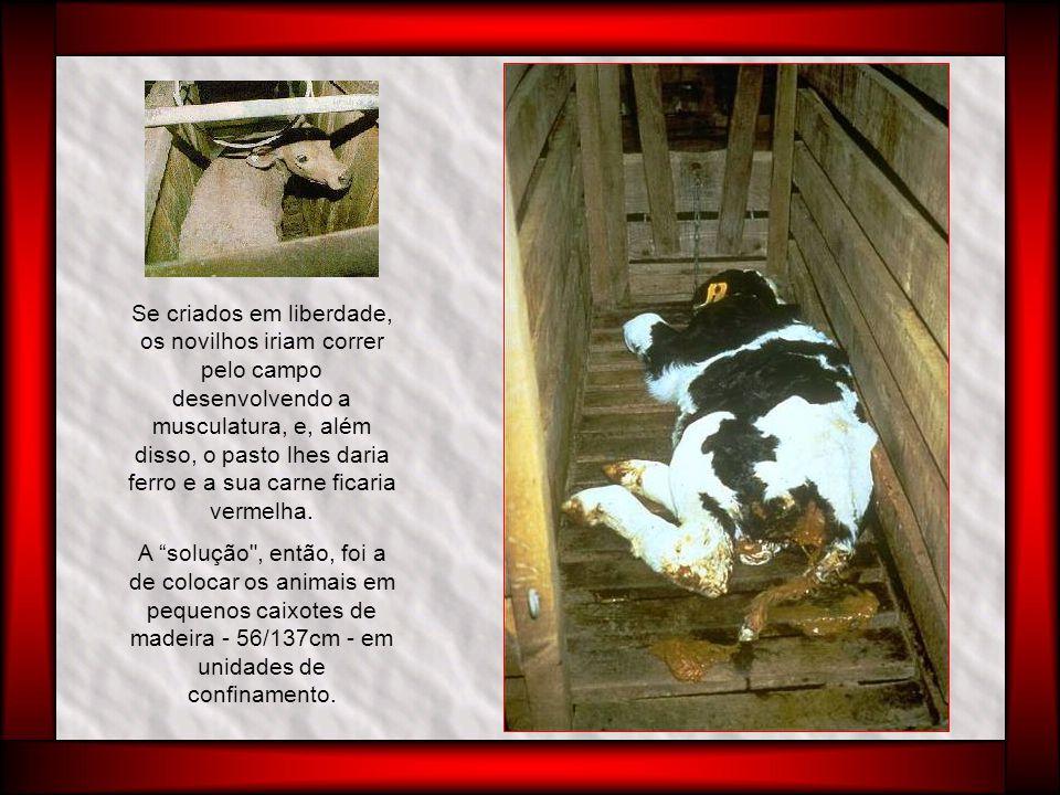 Um animal recém nascido fornecia pouca quantidade de carne.