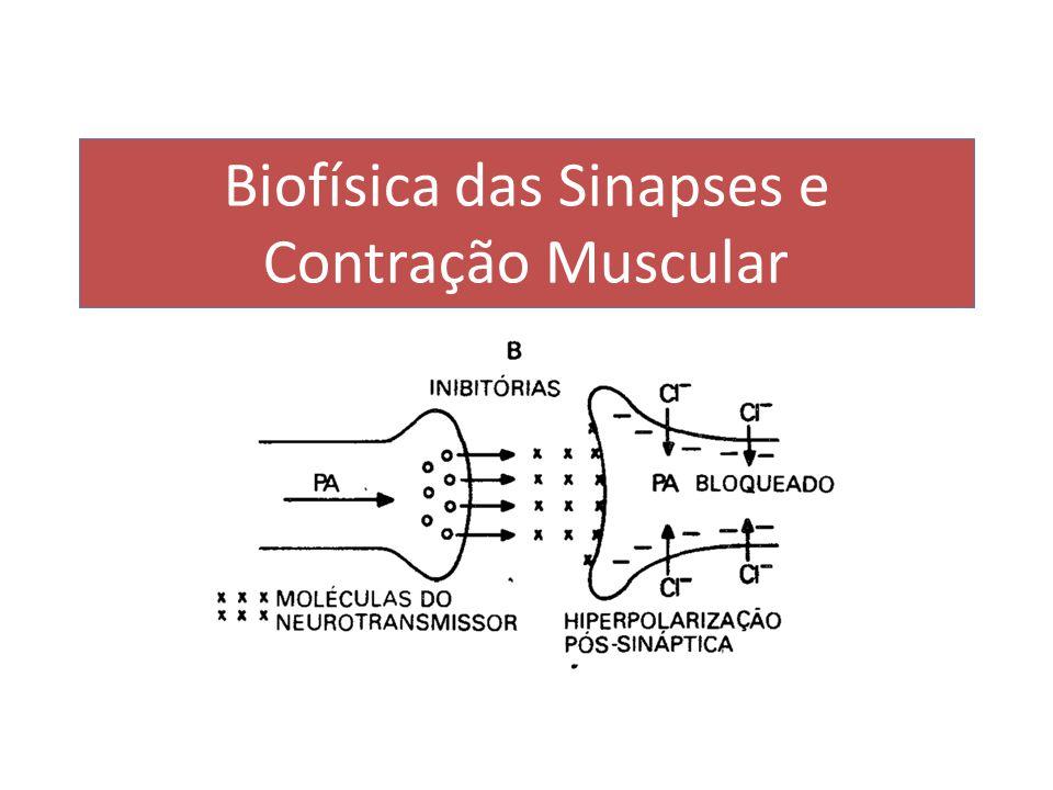 Biofísica das Sinapses e Contração Muscular