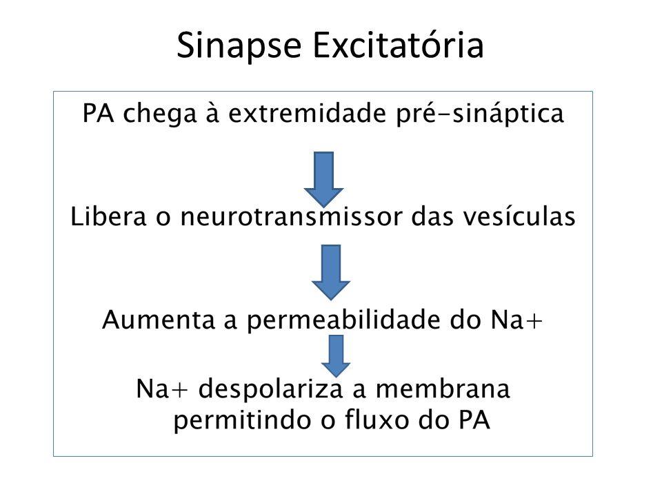 Sinapse Excitatória