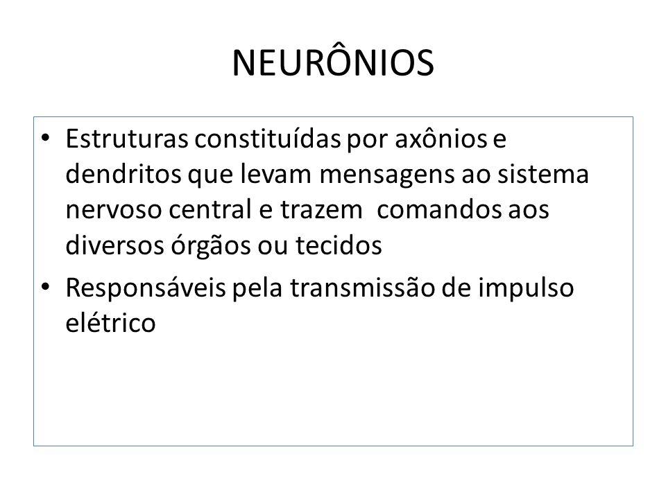 NEURÔNIOS Existem neurônios amielínicos e mielínicos Amielínicos : a membrana do axônio está em contato direto com os tecidos vizinhos Mielínicos : a membrana do axônio é envolvida pela célula de Schawnn – membrana lipoproteica chamada mielina Mielina e nódulos de Ranvier
