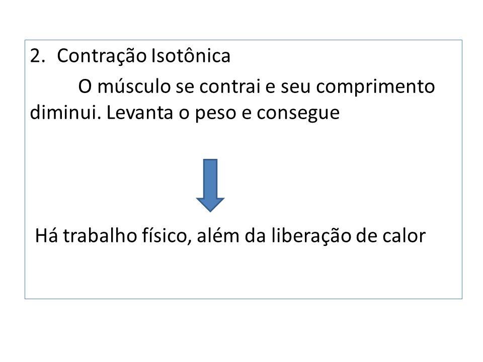 2.Contração Isotônica O músculo se contrai e seu comprimento diminui.