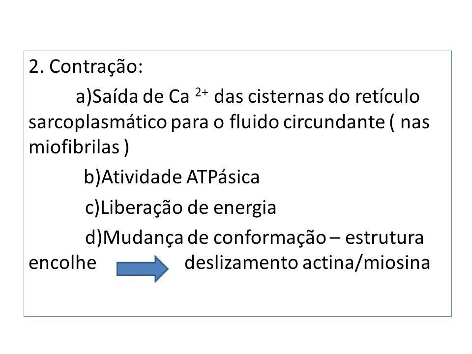 2. Contração: a)Saída de Ca 2+ das cisternas do retículo sarcoplasmático para o fluido circundante ( nas miofibrilas ) b)Atividade ATPásica c)Liberaçã