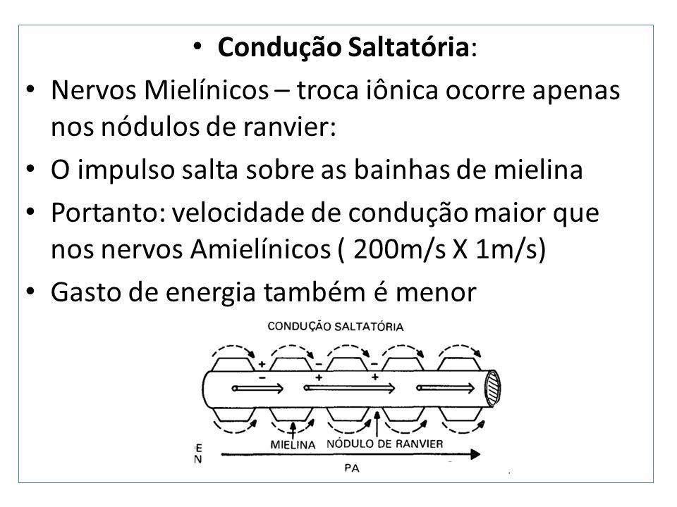 Condução Ortodrômica e Antidrômica Estimulação nervosa – impulso elétrico caminha nos 2 sentidos A condução no sentido programado do nervo : Ortodrômica A condução em sentido contrário do programado para o nervo: Antidrômica