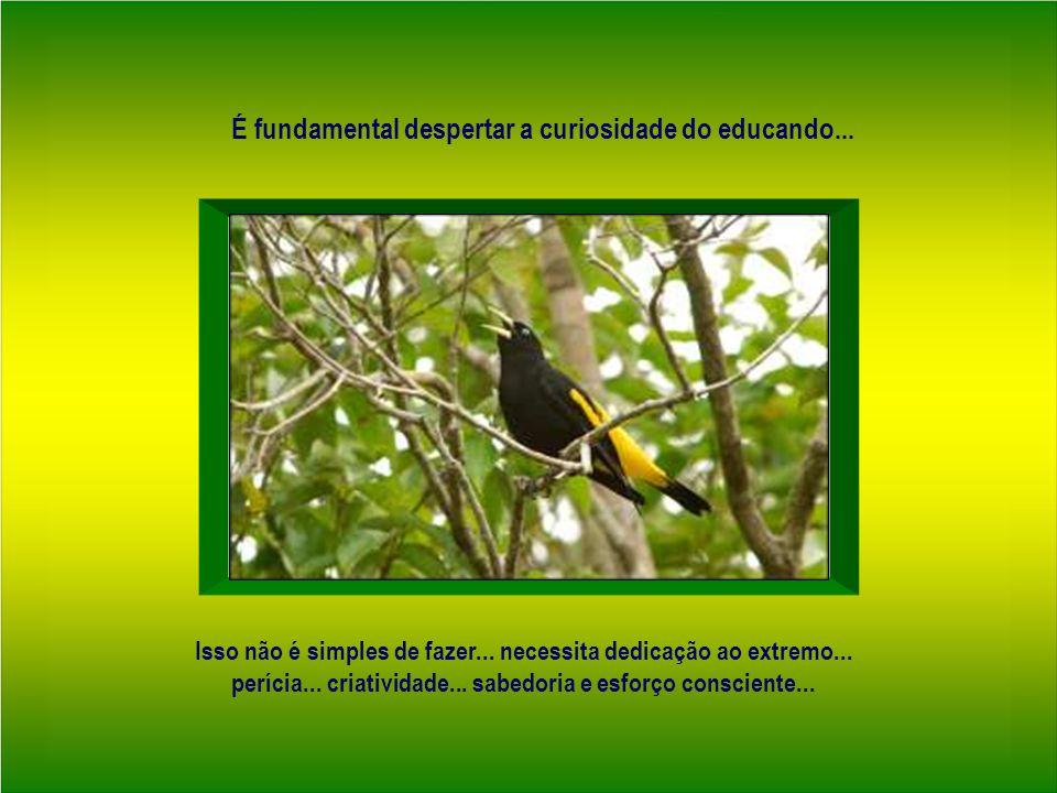 Um educador além do saber...necessita habilidade e competência para conduzir a curiosidade...