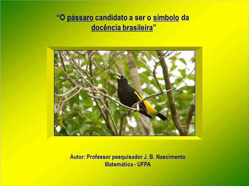 O pássaro candidato a ser o símbolo da docência brasileira Autor: Professor pesquisador J.