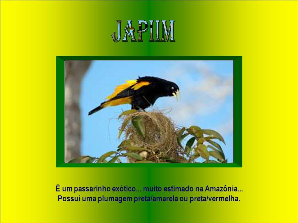 """""""O pássaro candidato a ser o símbolo da docência brasileira"""" Autor: Professor pesquisador J. B. Nascimento Matemática - UFPA"""