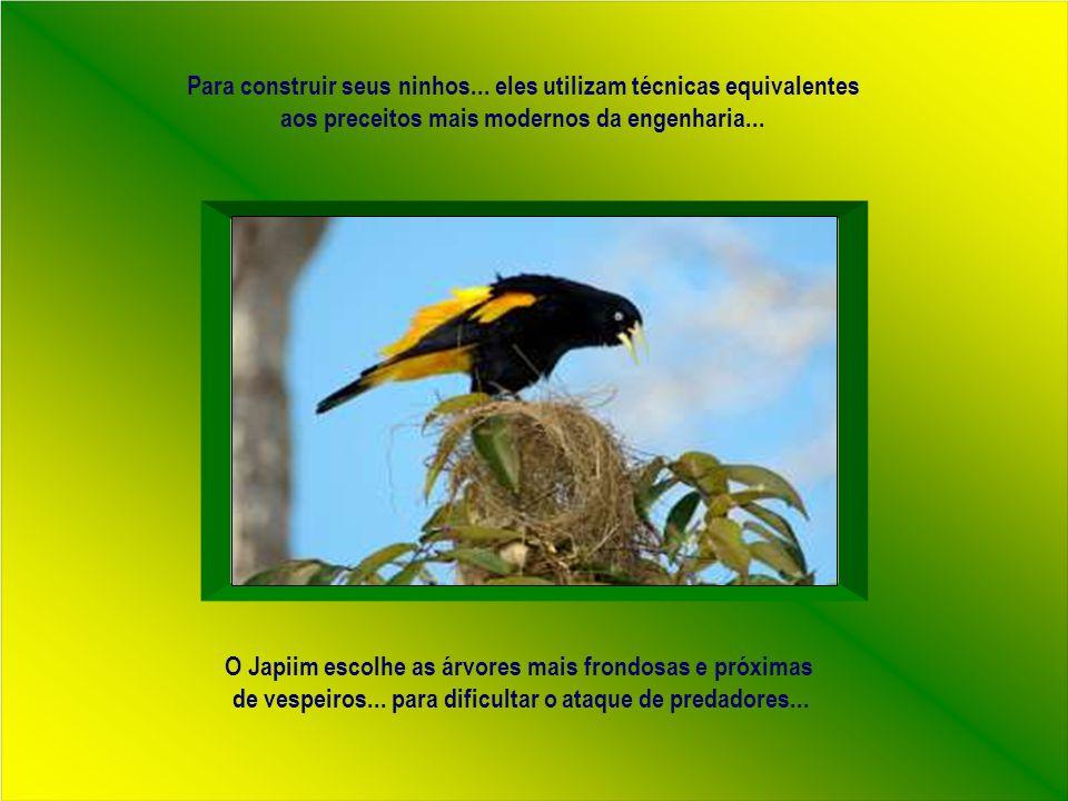 Adaptação de texto e formatação: rose.acaciana@gmail.com Som – Hino nacional com os pássaros brasileiros