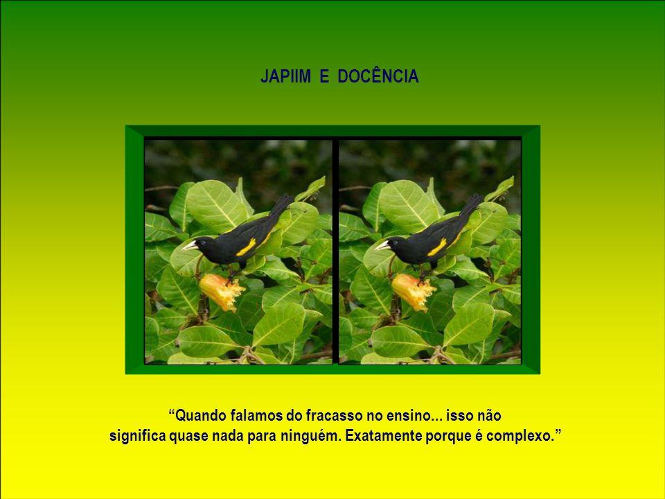 O japiim imita com perfeição o canto de uma variedade de aves...