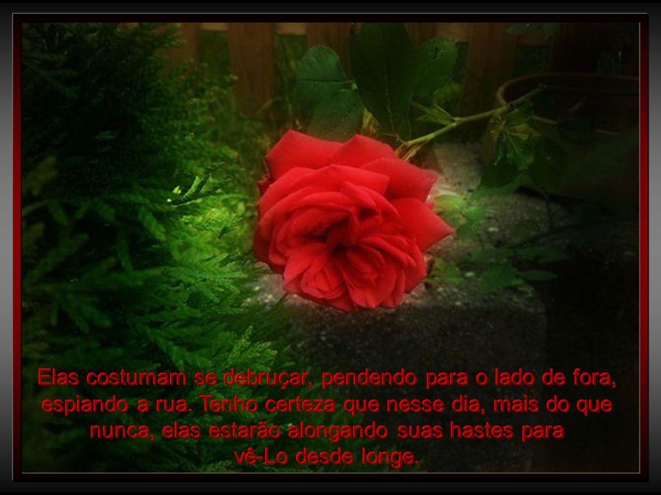 Se vier durante o dia, Você reconhecerá minha casa, pelas rosas que enfeitam a cerca.
