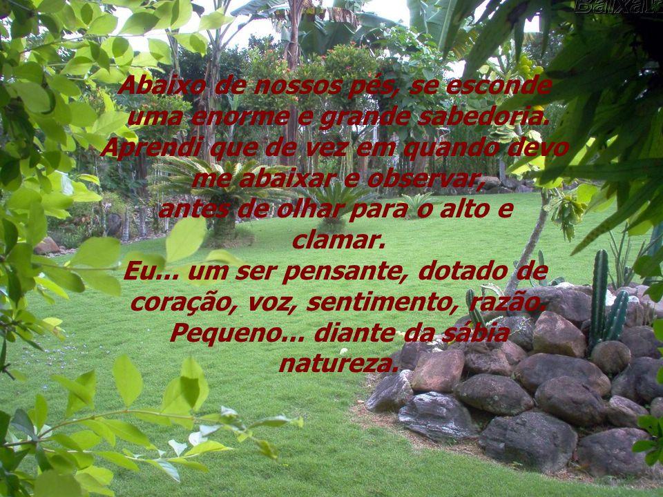 Encontrei sabedoria, solidariedade, harmonia, lição de vida, em um pequeno jardim.