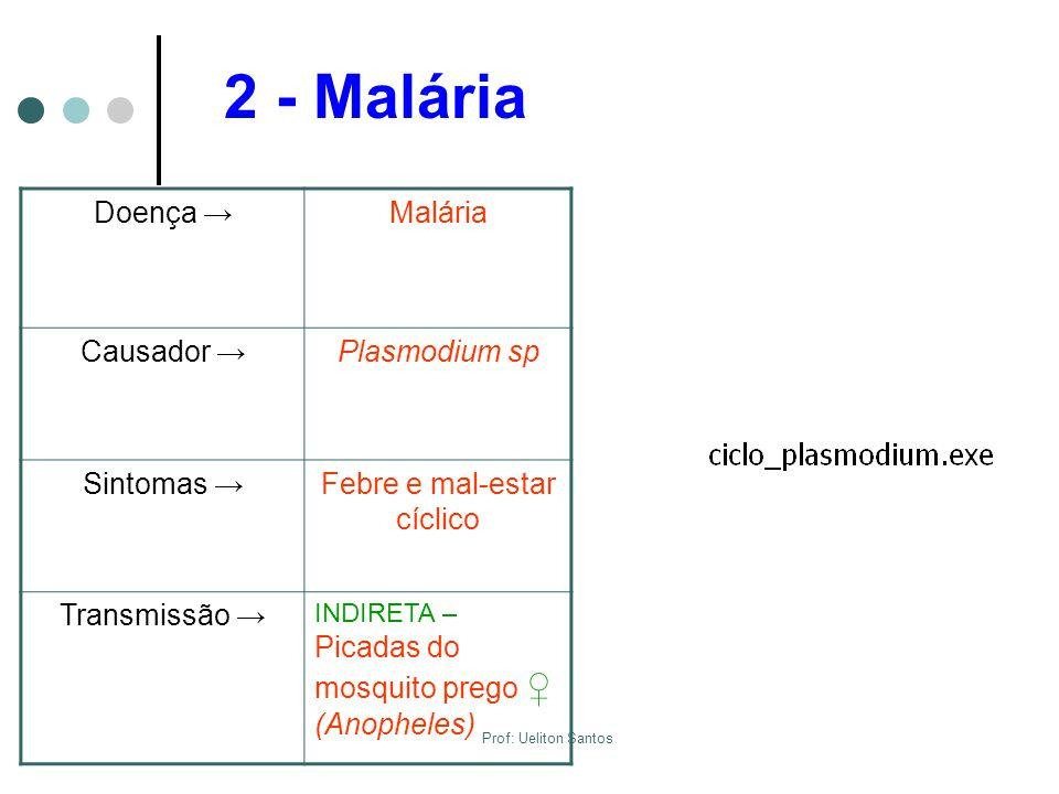 2 - Malária Doença →Malária Causador →Plasmodium sp Sintomas →Febre e mal-estar cíclico Transmissão → INDIRETA – Picadas do mosquito prego ♀ (Anophele